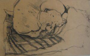 disegno cane matita