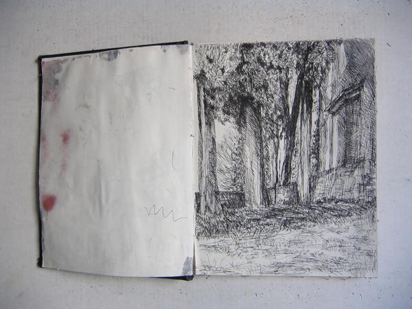 studio alberi disegni guido veronesi